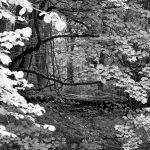 zwart-wit fotografie bos